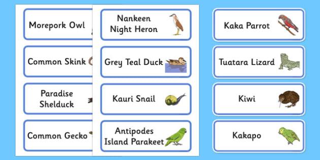 New Zealand Animals Word Cards - New Zealand Animals Display Posters, animals, New Zealand, word cards, cards, flashcard, kiwi, parakeet, gecko, skink, grey teal, parrot, paradise shelduck