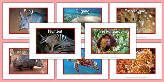 Endangered Australian Animals Display Photos - australia, animals, endangered