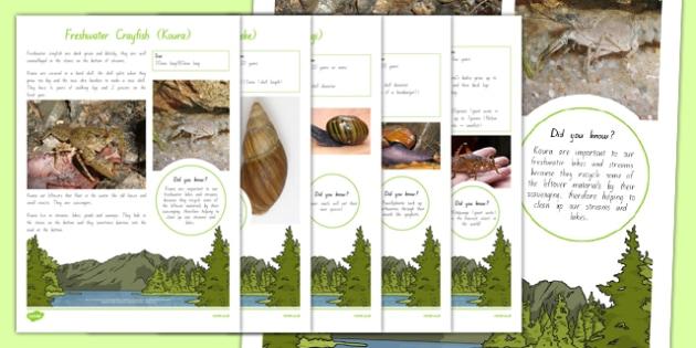 New Zealand Native Invertebrates Fact File - nz, New Zealand, animal, factfile, native, insect, weta, snail, crayfish