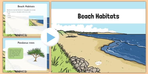 Australian Beach Habitat PowerPoint - australia, Science, Year 1, Habitats, Australian Curriculum, Beach, Living, Living Adventure, Environment, Living Things, Animals, Plants, PowerPoint