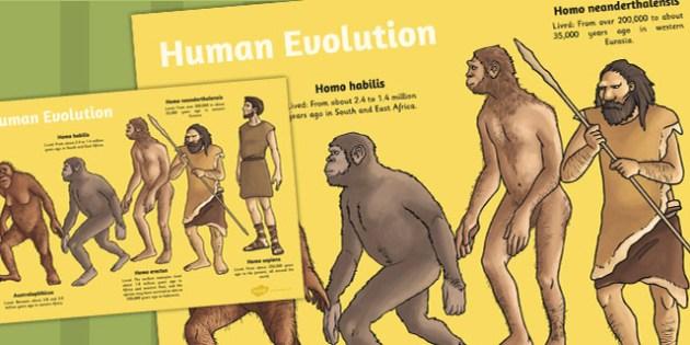 Human Evolution Display Poster - poster, evolution, display