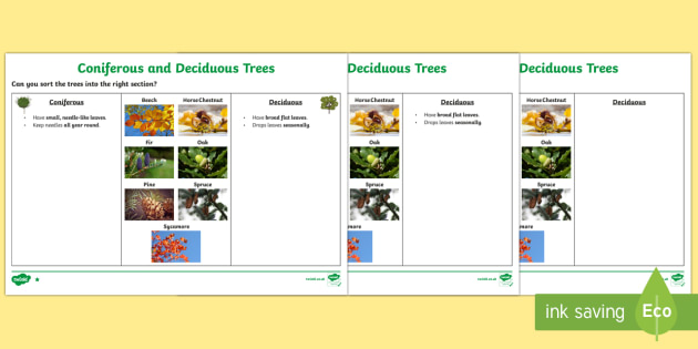 Deciduous and Coniferous Trees Differentiated Activity Sheets