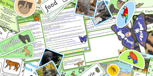 Jungle KS1 Lesson Plan Ideas and Resource Pack - pack, jungle