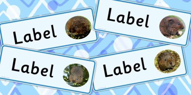 Water Vole Class Editable Labels - animals, signs, labels, vole