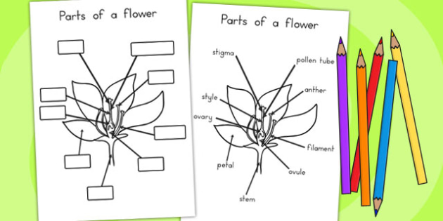 Parts of a Plant and Flower - Parts, Plant, Flower, Vegetation