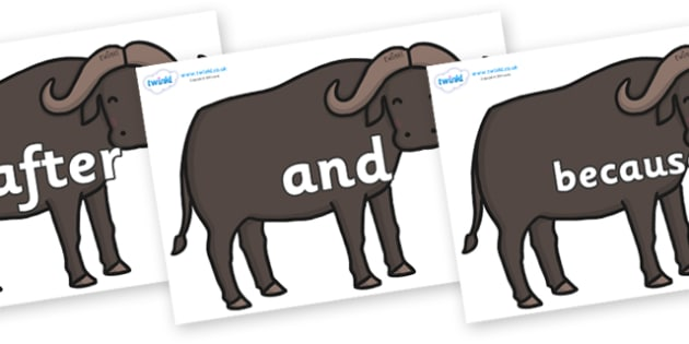 Connectives on Buffalos - Connectives, VCOP, connective resources, connectives display words, connective displays