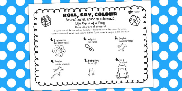 Life Cycle Of A Frog Roll Say Colour Romanian Translation - frogs