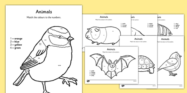 Animal Colour by Number Counting Activity Sheet - colour, number, counting, activity, colour by number, count, animal, worksheet