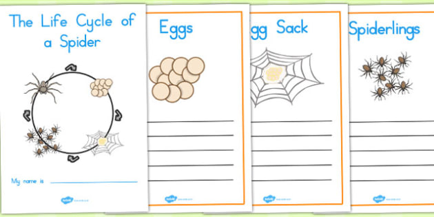 Spider Life Cycle Workbook - life cycles, keywords, visual aids