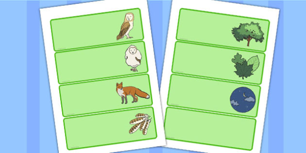 Owl Drawer-Peg-Name Labels - owl, labels, name, drawer, story