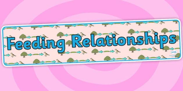 Feeding Relationships Display Banner - feeding relationships, feeding relationships banner, feeding relationships display, food chain banner, ks2 science