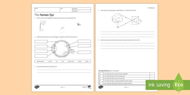 KS3 The Human Eye Homework Activity Sheet - Homework, eye, human eye, how we see, seeing, light, camera, cameras, pinhole camera, lens, focus, r