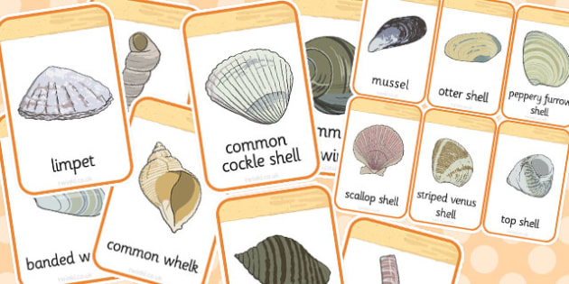 British Seashell Flashcards - british, seashell, flashcards
