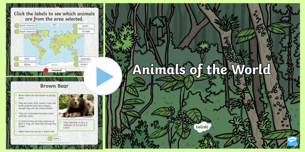 Animals From Around The World PowerPoint-animals from around the world, powerpoint, animals powerpoint, animals, species, information powerpoint