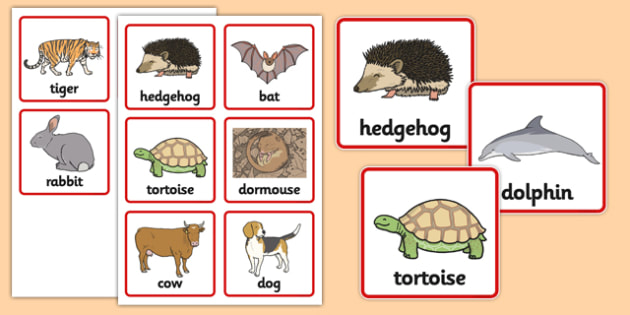 Hibernation Sorting Cards - hibernation, sorting cards, sorting, cards