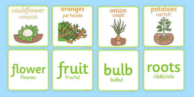 Fruit and Vegetable Plant Matching Cards Romanian Translation - romanian, fruit and vegetable plants matching cards, fruit and vegetable, fruit, vegetable, matching cards, matching, match, cards, flashcard, plants, apple, banana, pear, tomato, potato