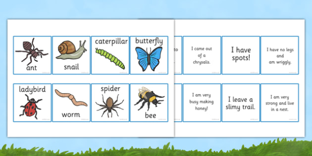 Minibeast Description Cards Matching Activity - minibeast, describe, insects, card