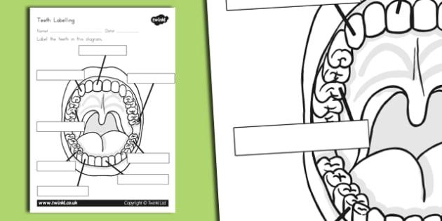 Teeth Labelling Worksheet - australia, teeth, labelling, worksheet
