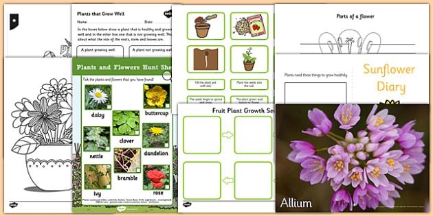 Top 10 Plants Resource Pack - top ten, top 10, plants, resource pack, resources
