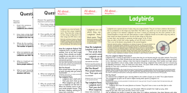 Ladybird Differentiated Reading Comprehension Activity Polish Translation - polish, ladybird, differentiated, reading comprehension, read, activity