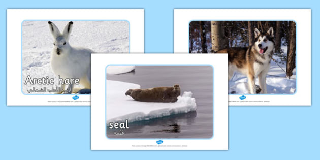 Arctic Animal Display Photos Arabic Translation - arabic, arctic, animals, display, photos