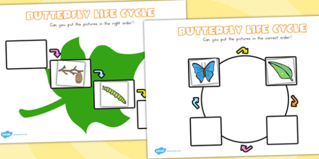 Butterfly Lifecycle Worksheets - life cycles, minibeasts, insects