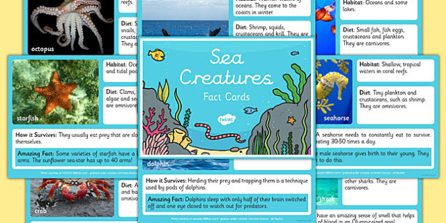 Sea Creature Fact Cards - underwater, water, animals, beasts, nautical, notes, information, data, challenge, independent, activity, ks1, key stage 1