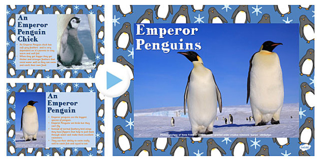 Emperor Penguin Information PowerPoint Presentation - penguin