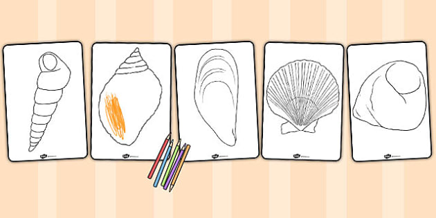 British Seashell Colouring Sheets - british, seashell, colouring