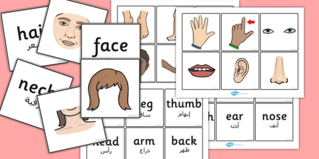 Parts of the Body Word and Picture Matching Cards Arabic Translation