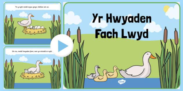 PwyntPŵer Yr Hwyaden Fach Lwyd PowerPoint-Welsh
