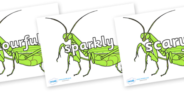 Wow Words on Praying Mantis - Wow words, adjectives, VCOP, describing, Wow, display, poster, wow display, tasty, scary, ugly, beautiful, colourful sharp, bouncy