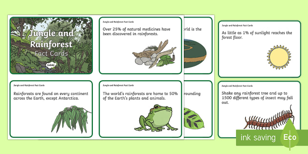 Jungle and Rainforest Display Fact Cards - facts