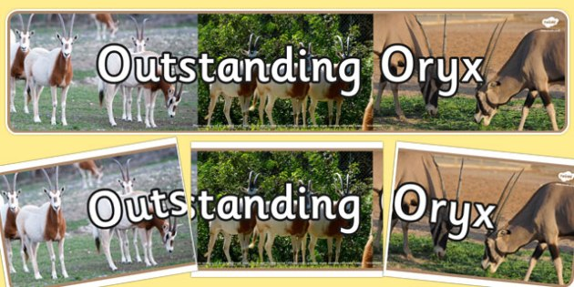 Outstanding Oryx Display Banner - outstanding, oryx, display banner