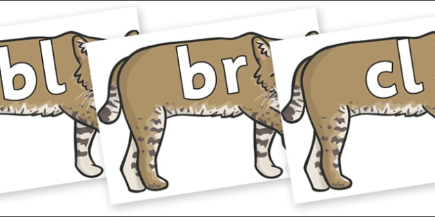 Initial Letter Blends on Bobcats - Initial Letters, initial letter, letter blend, letter blends, consonant, consonants, digraph, trigraph, literacy, alphabet, letters, foundation stage literacy