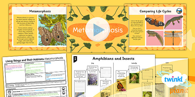 Science: Living Things and Their Habitats: Metamorphosis Year 5 Lesson Pack 5