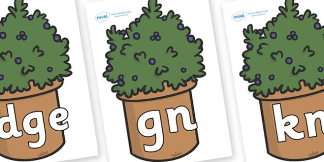 Silent Letters on Plants - Silent Letters, silent letter, letter blend, consonant, consonants, digraph, trigraph, A-Z letters, literacy, alphabet, letters, alternative sounds