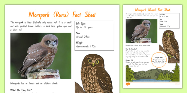 New Zealand Native Birds Morepork Fact Sheet - nz birds, new zealand, Native, birds, animals