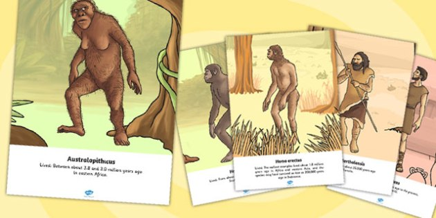 Human Evolution Display Individual Posters - posters, evolution