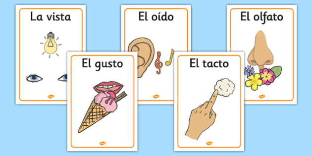 The Five Senses Posters Spanish - spanish, five senses, posters, display, display posters