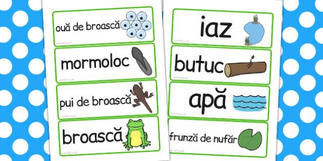 Ciclul de viață la broască - Cartonașe cu imagini și cuvinte