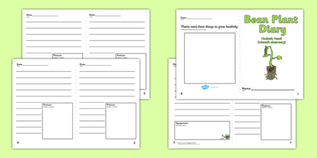 Bean Plant Diary Writing Frame Polish Translation - polish, Bean Plant Diary, Bean, writing template, writing frames, word cards, flashcards, template, growth, plant, life cycle, lifecycle, diary, plant growth, beans, garden, Topic, Foundation stage
