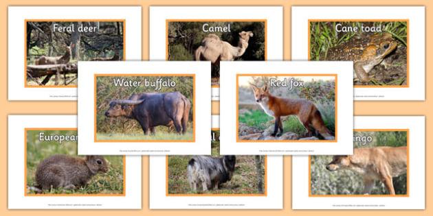 Introduced Animals in Australia Display Photos - australia, animals, introduced