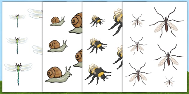 Minibeast Size Ordering - minibeasts, size, shape, order, animals