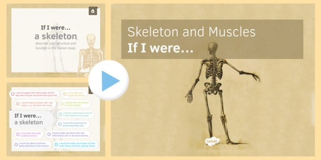 KS3 Skeleton and Muscles: If I were.... PowerPoint