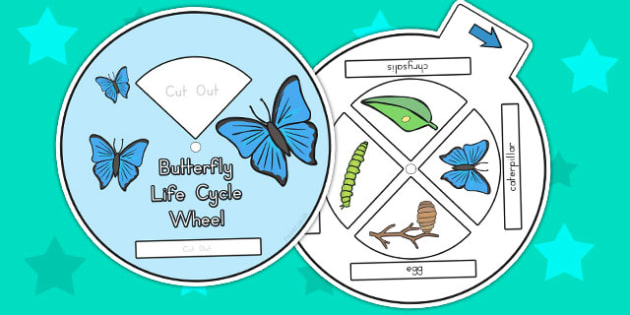 Butterfly Life Cycle Spin Wheel - life cycles, visual aids