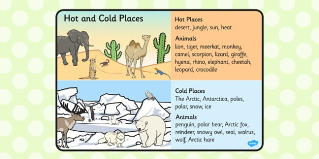 Hot and Cold Places and Animals Word Mat - hot, cold, animal, mat