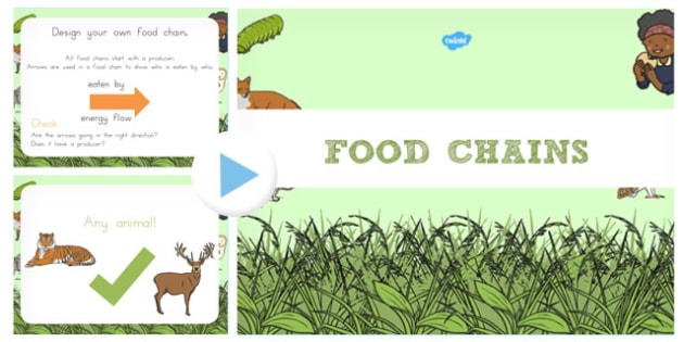 Food Chain PowerPoint - australia, food chain, food, chain, powerpoint