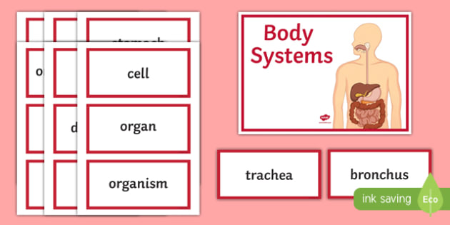 Body Systems Word Wall