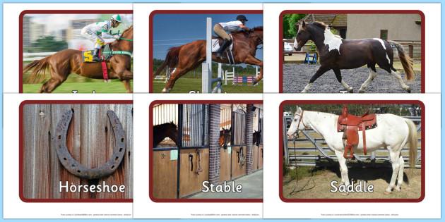 Horses and Ponies Display Photos - horses, ponies, display photos